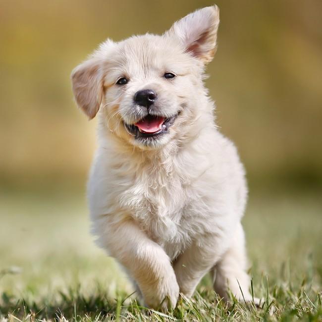 Warum sind Multivitamine gut für Hunde?