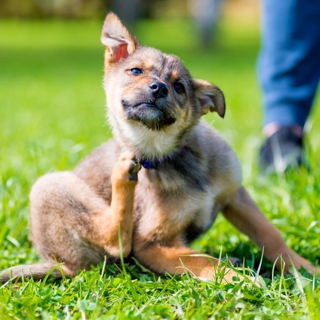 Wie man Zecken bei Hunden los wird