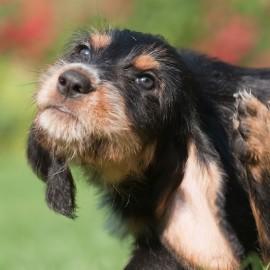 Wie man Flöhe beim Hund bekämpfen kann