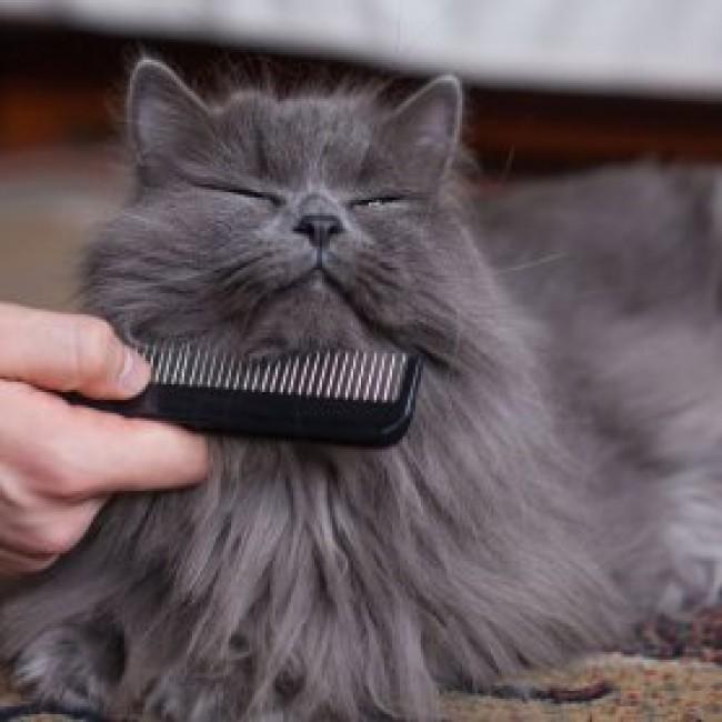 Wie pflegt man Katzen?