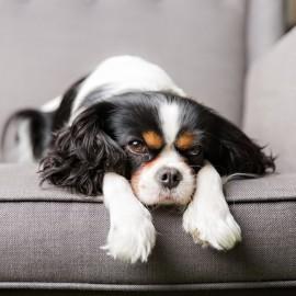 10 der häufigsten Hautprobleme bei Hunden